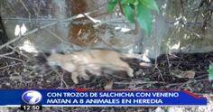 Encontremos a los responsables del envenenamiento de varios animales