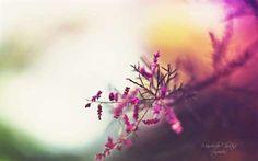 Image result for christina manchenko dream garden