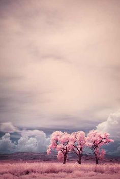 Infrared photography requires a different set of lenses and some photo manipulation (particularly to keep the sky blue), but the results yield these beautiful and surreal landscapes!