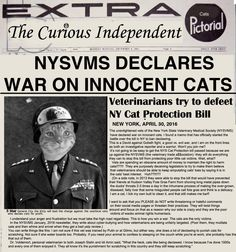 NYSVMS Declares War On Innocent Cats