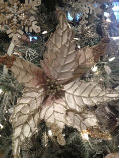 Frosted poinsettias