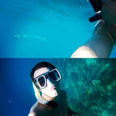 A month ago I was swimming on the Great Barrier Reef now I'm preparing myself for a week of work #yawn #boreoff #life #Australia #GreatBarrierReef #poutgamestrong #barracuda #snorkelling #takemeback by steverogers13 http://ift.tt/1UokkV2