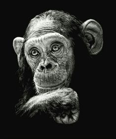 Scratch boards by Diana Lee Scratch boards by Diana Lee – Primates, Beautiful Creatures, Animals Beautiful, Cute Animals, Animal Drawings, Pencil Drawings, Art Drawings, Animal Original, Arte Banksy
