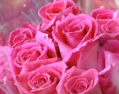 Hot Pink Roses - Discovered on imgfave.com