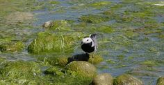 Most of the Pins Nature Gif, Nature Photos, World Wetlands Day, Gifs, Photo Grouping, Sustainable Development, Photo Archive, Image Sharing, Panda Bear