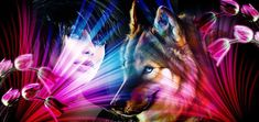 Horses, Animals, Animales, Animaux, Horse, Animal, Animais, Dieren