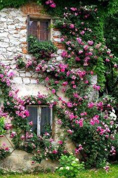 Fachada de casa con rosa trepadora