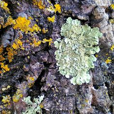 As cores e as texturas que se descobrem no tronco de uma árvore #arvore #texturas #tree #textures #treetextures