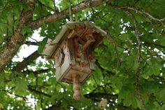 Ilmaisia Kuvia : puu, luonto, metsä, haara, lintu, puun lehti, kukka, villieläimet, vihreä, viidakko, hyönteinen, eläimistö, sademetsä, elinympäristö, pesä, lintuhuone, puumainen kasvi 6000x4000 -  - 1075244 - Ilmainen Kuvapankki - PxHere