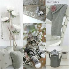 Lovely grey life in colors