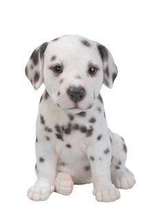 Vivid Arts Dalmatian Puppy Pet Pals Garden ornament Outdoor& Indoor Use Dog Lover Gifts, Dog Gifts, Dog Lovers, Cute Puppies, Cute Dogs, Dogs And Puppies, Puppies Tips, Animals And Pets, Baby Animals