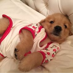 Community Post: 12 Puppies In Pajamas That Will Brighten Your Day Puppies and PJs? There's nothing cuter. Cute Baby Dogs, Cute Little Puppies, Cute Dogs And Puppies, Cute Little Animals, Cute Funny Animals, Funny Dogs, Doggies, Baby Animals Pictures, Cute Puppy Pictures