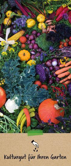 Pumpkin, Outdoor, People, Plants, Gardening, Outdoors, Gourd, Pumpkins, Outdoor Games