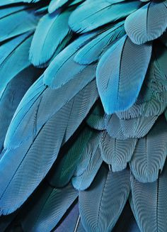 Petrol feathers, julisteet