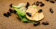 Come fare per tenere lontani gli insetti rispettando l'ambiente? Adottando rimedi naturali, non tossici e semplici da realizzare anche col fai-da-te. Le soluzioni sono tante, vediamone alcune insieme.