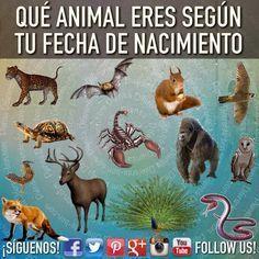 QUÉ ANIMAL ERES SEGÚN TU FECHA DE NACIMIENTO. Nuestra fecha de nacimiento hace que sepamos mucho de nuestra personalidad y eso hace que conozcamos más sobre nosotros mismos y a su vez podamos saber cual es el animal que rige sobre nuestro signo zodiacal. Aquí te explicamos que animal eres según la fecha de tu nacimiento, averigua cual es el tuyo.