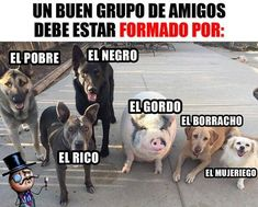 New Funny Jokes For Adults Humor Hilarious Sad Ideas New Funny Jokes, Funny Spanish Memes, Funny Jokes For Adults, Good Jokes, Funny Dogs, Funny Animals, Funny Memes, Hilarious, Mexican Jokes