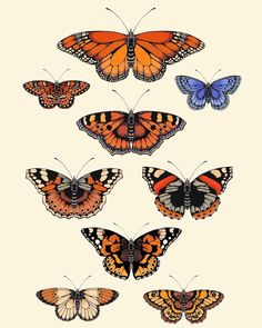 "82 Me gusta, 3 comentarios - EMILY CARTER (@emilycarterlondon) en Instagram: ""British Butterflies 🦋 my new collection of hand-illustrated art prints, inspired by antique…"" Butterfly Illustration, Hand Illustration, Wall Art Prints, Fine Art Prints, Scientific Drawing, Garden Angels, Butterfly Watercolor, Artist Art, Cool Art"