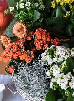 Herbstlich dekorierter Pflanzring mit Kalanchoes, Stacheldraht und Rosmarin | waseigenes.com Fall Diy, Halloween Diy, Wreaths, Autumn, Feelings, Spring, Flowers, Plants, Blog