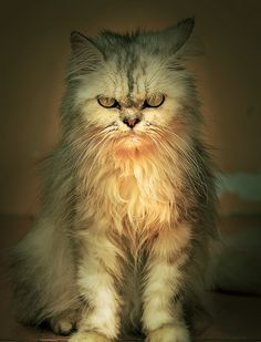 """""""Some people say that Man is the most dangerous animal on the planet. Obviously, these people have never met an angry cat."""" --Lillian Johnson"""