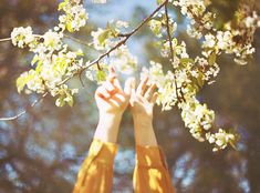 Immagine di flowers, hands, and spring