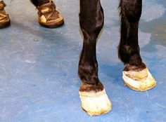 81 Best Equine Hoof Care Images In 2020 Horse Care