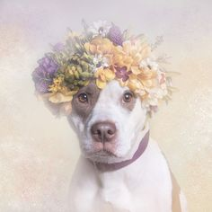 STYLES : Flower Power by Sophie Gamand Photography. All the models from the series are shelter pit bulls who were waiting for adoption at the time of the photograph.
