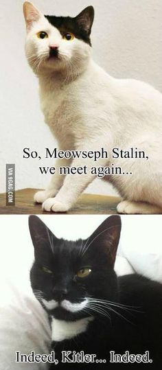 what a claw-ver hiss-tory  kitteh pun!