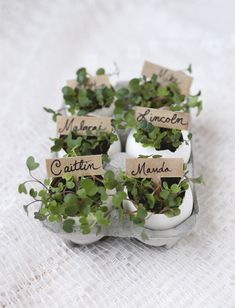 Eggshell Place Card Holders | The Merry Thought