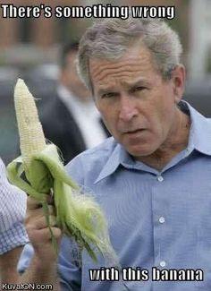 Bush banana