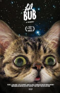 """""""Lil Bub & Friendz"""" The Internet's Favorite Cat- I want to see this"""