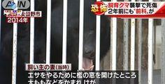 (Nagano) Um homem morreu devido ao ataque de um urso que ele mesmo criava há 8 anos.