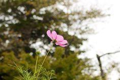 宗吾霊堂  #art #artwork #写真 #photography #アート #photo #花 #植物 #flowers #風景 #landscape #葉紋