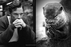 Image result for benedict cumberbatch otters tumblr