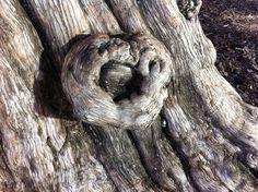 Heart Tree Heart Tree, Chakra Healing, Chakras, Insects, Chakra