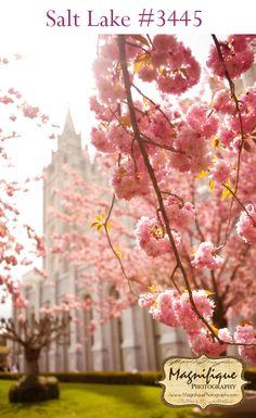 Love these prints of the SLC temple in the spring! Pink blossoms & Salt Lake Temple - beautiful.