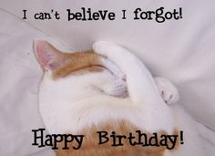 I can't believe I forgot your birthday *kitty face-palm!*