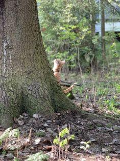Ajankohtaista  Onko lemmikilläsi jo mikrosiru? Trunks, Plants, Drift Wood, Tree Trunks, Plant, Planets