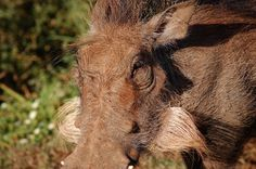 Random by Christoff P. Vosloo, via Behance Behance, Horses, Random, Pictures, Animals, Photos, Animales, Animaux, Animal