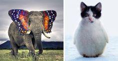 15 extraños animales híbridos creados con Photoshop  Creatividad a tope. Es una bonita actividad para hacer también dibujando. Y puede continuar poniéndoles nombre a los animales creados e imaginando su modo de vida.