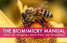 biomimicry, bio-utilization, bio-assistance, biophilia, honeybees, honeycomb, beeswax, Jay Harman, the biomimicry manual, bioinspiration, le...