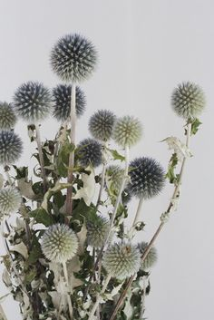 Lovely dried thistle