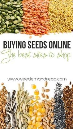Buying Seeds Online: The Best Sites to shop! - Thinking about buying seeds online? Whether you're buying seeds online for a huge vegetable garden, or you're just looking to raise a few pots of plants, it's important to