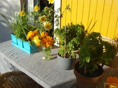 growing herbs at my allotment. Growing Herbs, Allotment, Rum, Plants, Rome, Plant, Planets