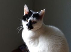 Pansy (18 years old)