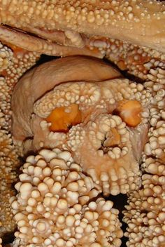 Altamura Man was discovered in 1993 near the city of Altamura, Italy. The ancient calcified skull confounded experts, who could not agree on his age, nor the species he belonged to. However, a new study has now determined that Altamura Man is a Neanderthal and the bones are between 128,000 and 187,000 years old. Using the latest high-tech methods, they have been able to extract a bone sample which represents the oldest DNA ever recovered from a Neanderthal.