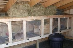 RABBIT HUTCH INSIDE CHICKEN COOP We have ours together and they're fine. In fact, the chickens will eat the bugs off the ground that gather around the bunny poop.We actually stopped using individual cages and set up a rabbit colony with the bucks and does