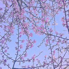 【hogisienne】さんのInstagramをピンしています。 《2017.02.03 椿山荘の庭園の河津桜。 案内板には見頃は3月と書いてありましたが、すでに満開でした♪  #cherryblossom #cherrytree #fleur #flower #flowers #flowerlovers #flowerstagram #floral_perfection #flower_beauties #naturelovers #the_sence_of_wonder #Chinzanso #Tokyo #如月 #冬の花 #冬の庭 #日本庭園 #桜 #河津桜 #椿山荘》