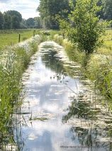 #Natur im #Spreewald entdecken dann  www.spreewald-hotel-stern.de