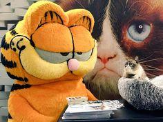 Garfield meets Grumpy Cat